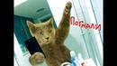Приколы с котами – САМЫЕ СМЕШНЫЕ ВИДЕО В МИРЕ – ТЕСТ НА ПСИХИКУ от PSO