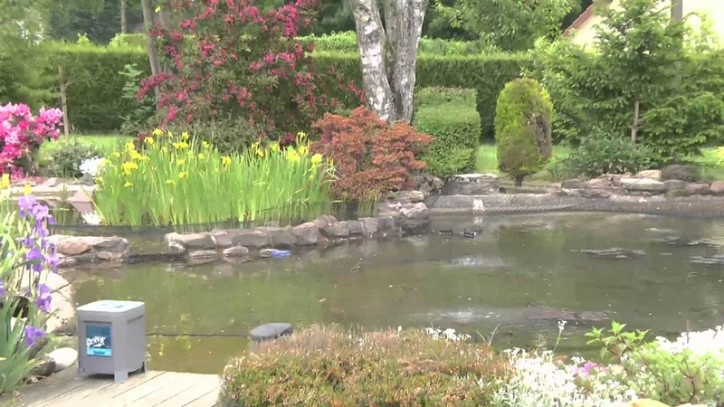 Le superbe bassin de jardin d'Alain