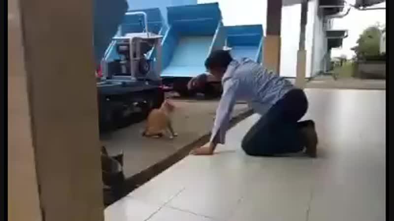 Терки с котом