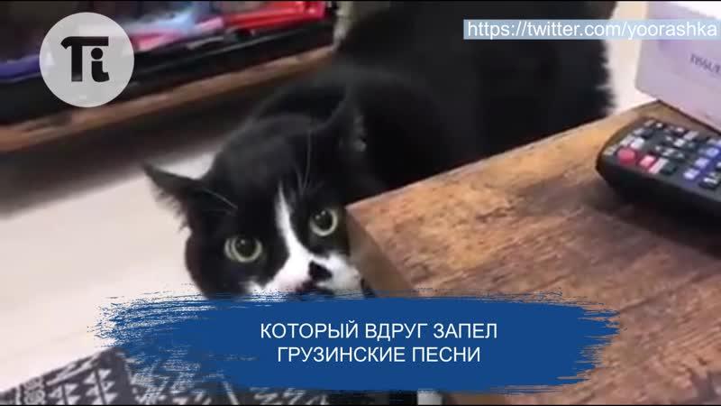 Петербургский кот виртуозно исполняет грузинские песни
