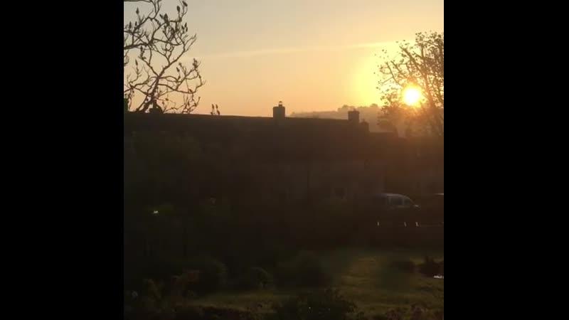 My noisy neighbours wake me up every morning dawnchorus loudbirds countrylife cotswolds dontneedanalarm