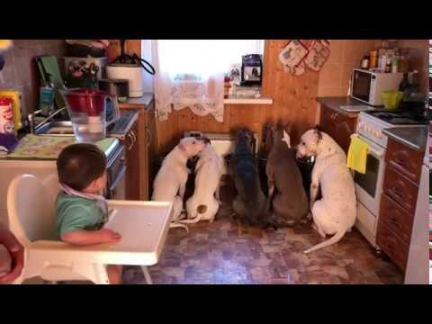 Время поесть. Построение собак, сума сойти