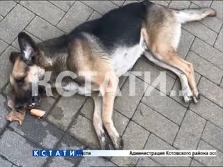 Живодерская парочка молодой человек с девушкой убивают собак у всех на глазах