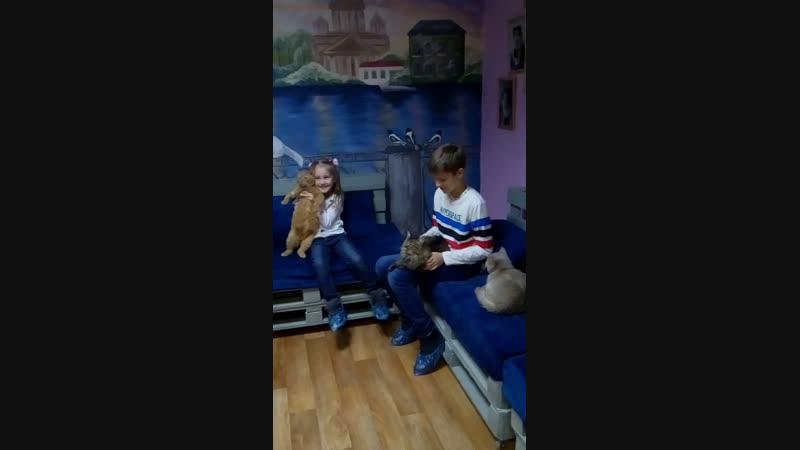 Live Котокафе КОТейня Дзержинск
