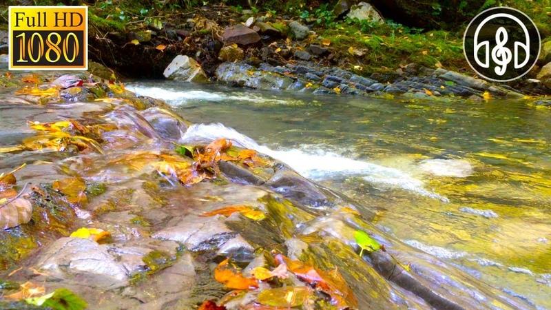 Нежный Шум Реки Для Релаксации и Сна. Успокаивающее Журчание Воды 6 Часов
