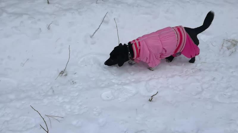 Милой и активной собаке Молли нужен дом!