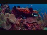 Коралловый риф-Танец рыцарей-Сергей Прокофьев