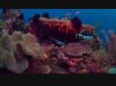 Коралловый риф Танец рыцарей Сергей Прокофьев