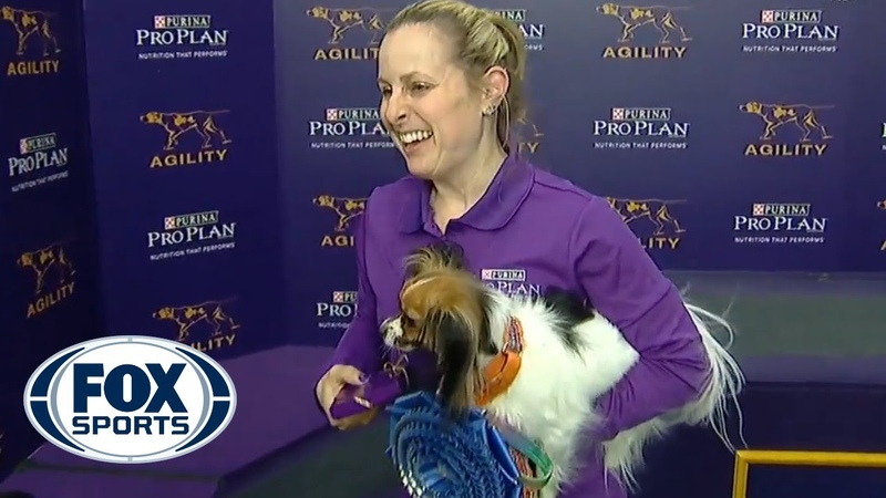 Gabby captures the 8 division title at the 2019 WKC Masters Agility | FOX SPORTS
