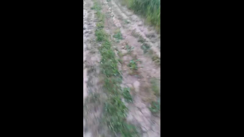гуляю по Лесу