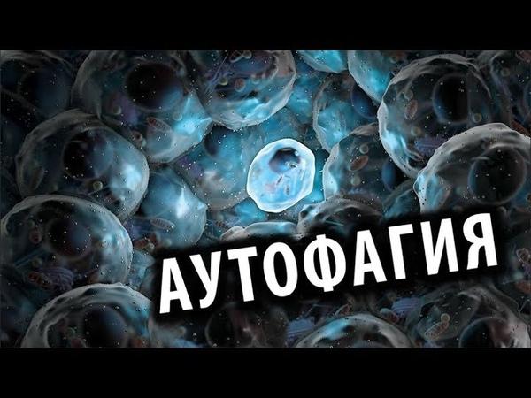 Аутофагия: Чудо ИЛИ ...