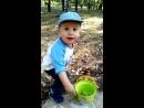 Юный садовод  собирает  жёлуди