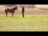 Jordan Brasser Horsemanship, Catch me if you can