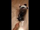 полиэтиленовый кошак  кисаВасилиса Василиса спинальник кошки инвалиды любят тусить