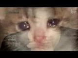 самое грустное видео в интернете