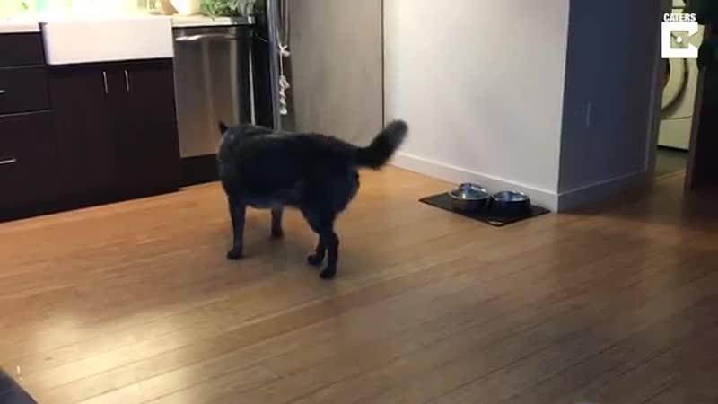 Собака приносит пиво своему хозяину Что может быть лучше
