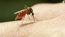Чем мазать укусы комаров 6 действенных способов избавиться от зуда