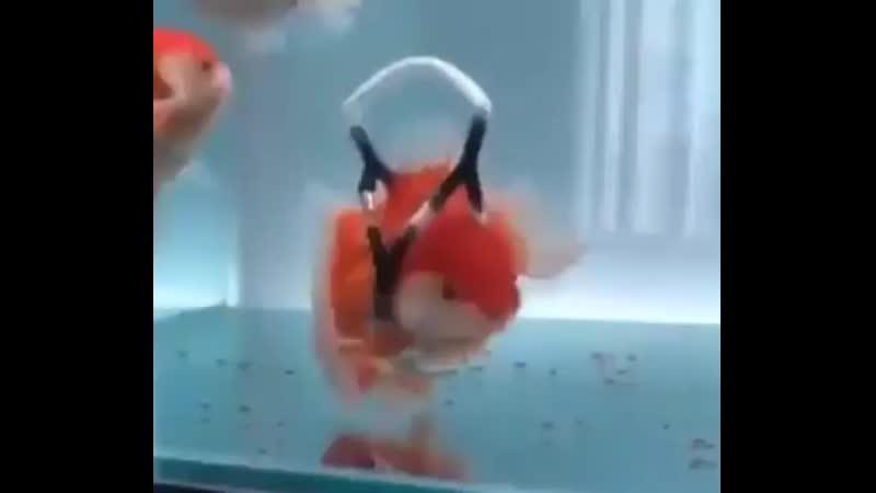 рыбка инвалид