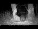 Бобер валит дерево ночью (2).mp4