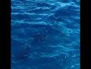 Дельфины в открытом море и мы Египет Красное море