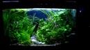 Aquarium. Травник. Aquatic plant.