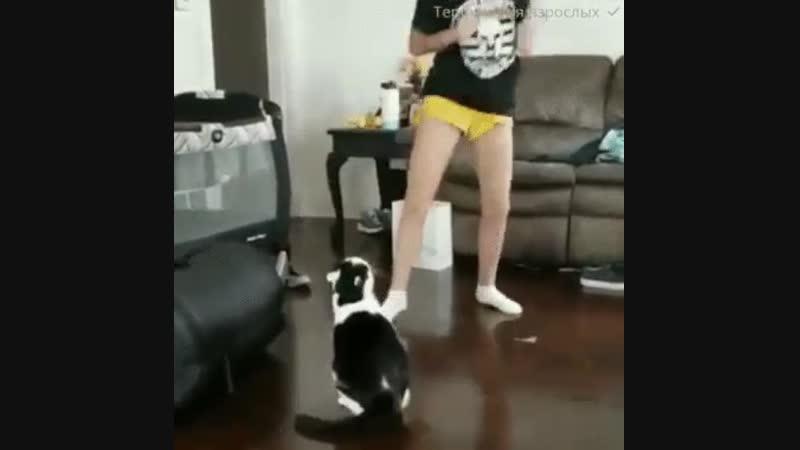 не обижайте кошечек.... и котиков!