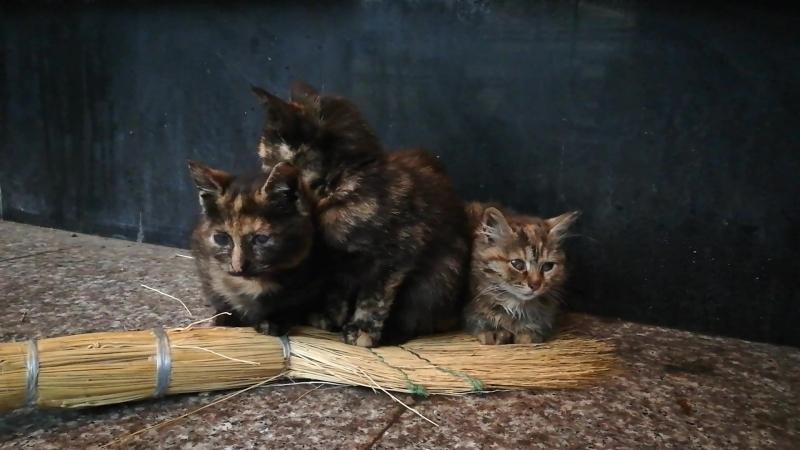 Помогите котятам выжить Москва