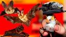 Почему летучая мышь летит на белую простыню. Факты про летучих мышей
