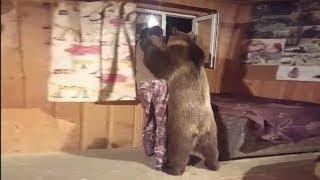 И медведь - друг человека!