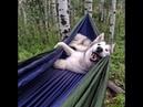 Cười Không Nhặt Được Mồn Với Những Chú Chó Hài Hước Nhất Thế Giới
