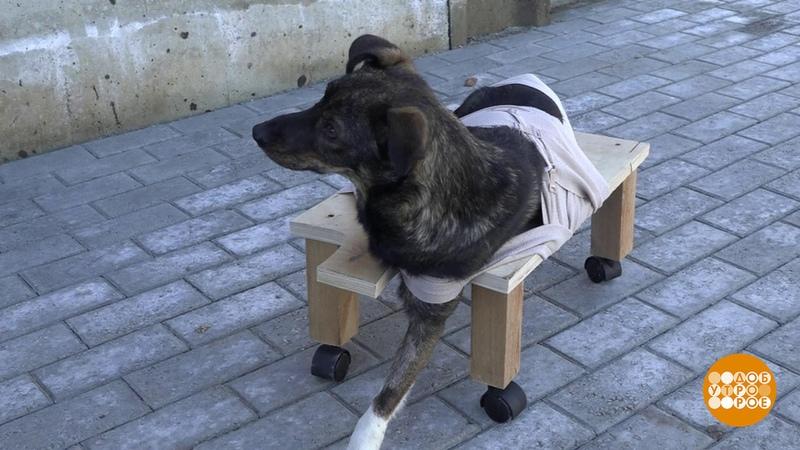 Когда собаки верят вчудо… Доброе утро. Фрагмент выпуска от17.08.2018