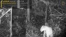 Amazon Animals Discover Themselves in a Mirror Nat Geo Wild