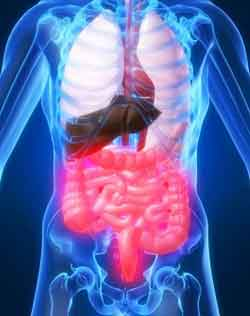 Синдро́м раздражённого кише́чника (СРК) — функциональное заболевание кишечника, характеризуемое хронической абдоминальной болью, дискомфортом, вздутием живота и нарушениями в работе кишечника в отсутствие каких-либо органических причин.