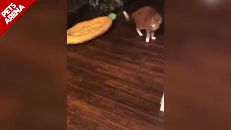 EPIC LAUGH Funniest Scared Cat Home Испуганные коты