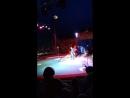 цирк 2 попугаи