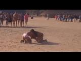 Fighting Culture Wildlife Girls In Amazon Hunting Animals - YouTube