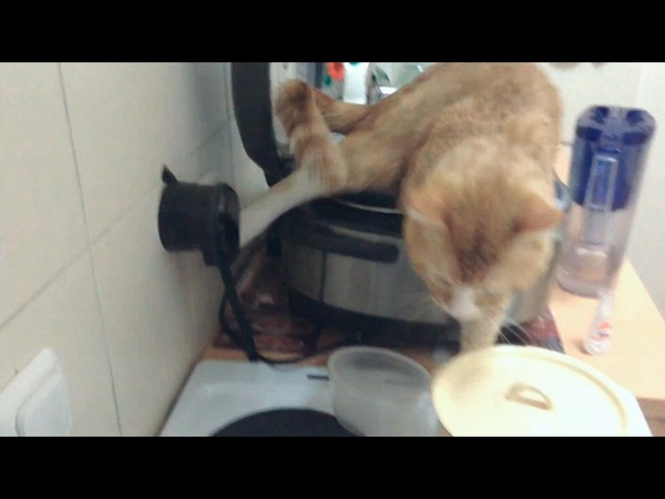 Кот нассал в мультиварку Cat pee in a Multicooker