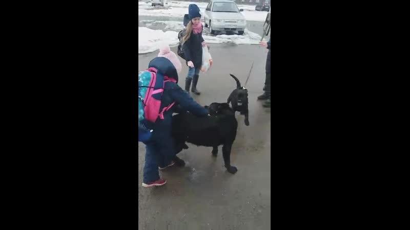 Шер Хан 7 мес И Аир Форс Буч 4 мес