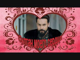Султан моего сердца СМС