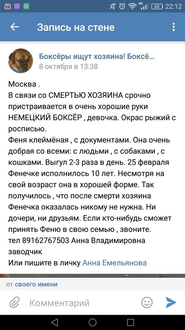 Москва, Офента Денизоль, сука, 25.02.2008г.р.под частичной опекой команды. QFCSZ19KBAQ