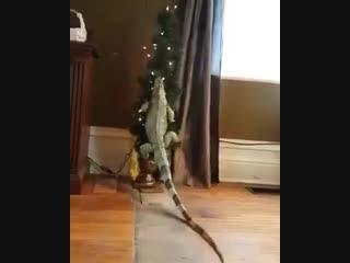 Рептилоид портит праздник гоям