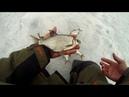 Белая рыба на гирлянду и хитрая ВОРОНА