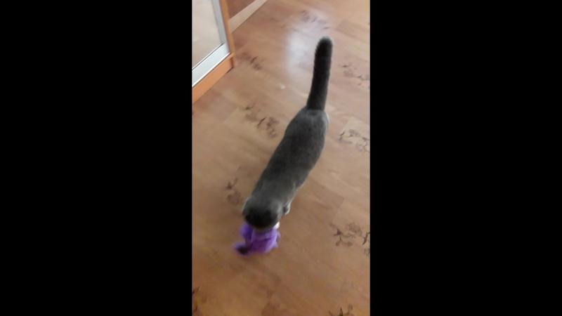 Кот тырит игрушки у ребёнка