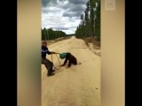 Медведя с канистрой на голове ищут в Якутии