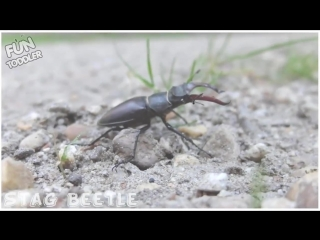 Insects Bugs in Real Life. Education Learning Video
