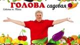 Голова садовая - Что вы забыли положить в лунки для томатов, огурцов, перцев и баклажан