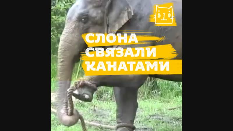 Слона связали канатами