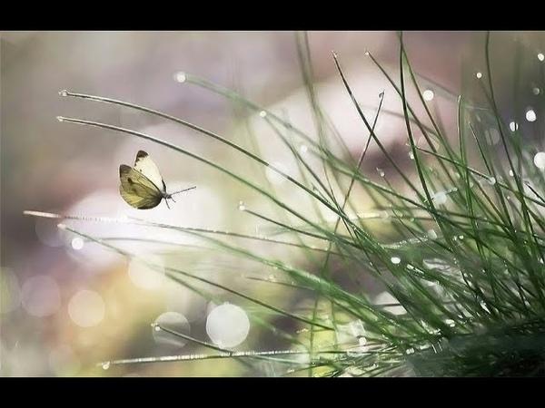 РОСНОЕ-СЛЁЗНОЕ стихотворение-плач. Читает автор — Елена Артёменко. Запись — февраль, 2019 года