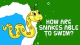 Interesting Facts About Reptiles | How Are Snakes Able To Swim?