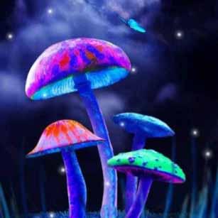 Существует пороговая доза для ощущения эффектов от высушенных волшебных грибов.